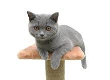 Kitten closeup on white background Stock Photos
