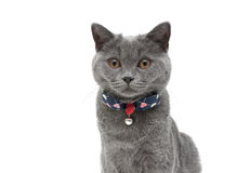 Kitten closeup on a white background. horizontal photo. Royalty Free Stock Photos