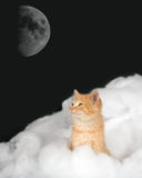 Kitten in the clouds with moon Royalty Free Stock Photography