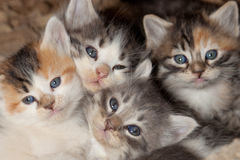 Kitten Clutter Royalty Free Stock Photo