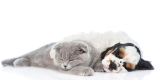 Kitten and Cocker Spaniel  puppy sleeping together. isolated. On white Stock Images