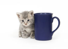Kitten and coffee cup Royalty Free Stock Photography