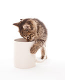Kitten with coffee cup Stock Photos