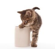 Kitten with coffee cup Royalty Free Stock Image
