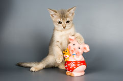 Kitten with a coin box. In the form of a pig in studio Stock Photos