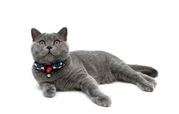 Kitten in collar with a bow on a white background Royalty Free Stock Photography