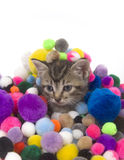 Kitten and colorful puff balls Royalty Free Stock Photo