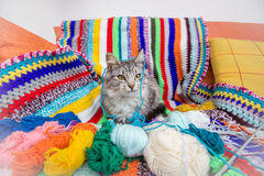 Kitten with colorful woven pattern Royalty Free Stock Photos