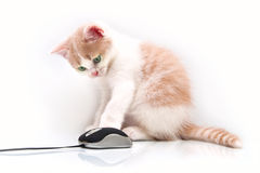 Kitten with the computer mouse Royalty Free Stock Image