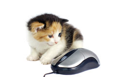 Kitten and computer mouse isolated. On white Royalty Free Stock Photos