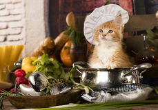 Kitten in a cook`s cap Stock Photo