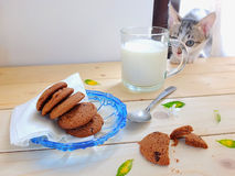 Kitten, cookies and milk Royalty Free Stock Photography