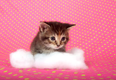 Kitten and cotton Royalty Free Stock Photography