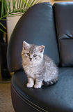 Kitten on the couch Royalty Free Stock Photography