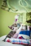 Kitten on couch Stock Photos