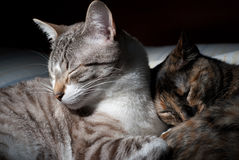 Kitten couple Royalty Free Stock Images