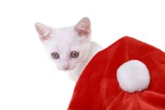 Kitten with Cristmas cap Royalty Free Stock Images