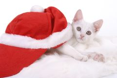 Kitten with Cristmas cap Royalty Free Stock Photography