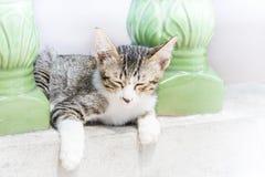Kitten crouches on balcony edge Stock Photos