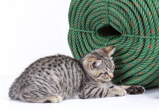 Kitten crouching near a large coil of green rope Stock Photo