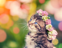 Kitten crowned with a chaplet Royalty Free Stock Photos