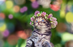 Kitten crowned with a chaplet. Cute little kitten crowned with a chaplet of clover Stock Photos