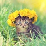 Kitten crowned flowers chaplet Royalty Free Stock Image