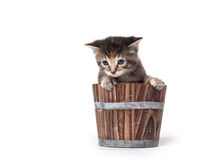 Kitten crying in a barrel Stock Photo
