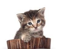 Kitten crying in a barrel Royalty Free Stock Photos