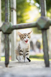 Kitten. Crying behind the railing Royalty Free Stock Photos