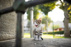 Kitten. Crying behind the railing Stock Image