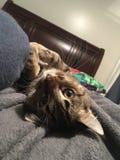 Kitten cuddles Royalty Free Stock Photo