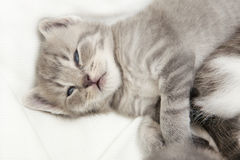 Kitten cuddling. A heap of cat is cuddly babies on their mother Stock Photo
