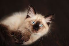 Kitten curled up in bowl Stock Image
