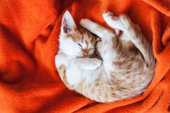 Kitten curled up on an orange plaid. Red kitten on the blanket stock photo