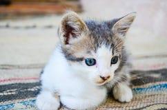 Kitten. Cute  Little kitten  with amazing eyes outdoor Stock Photos