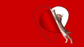 Kitten Cutting Out Valentines Day hjärta royaltyfri foto