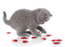 Kitten and decorative hearts Stock Images
