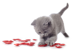 Kitten and decorative hearts Royalty Free Stock Photography