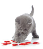 Kitten and decorative hearts Stock Photos