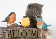 Kitten and decorative welcome sign Royalty Free Stock Image