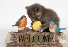 Kitten and decorative welcome sign Stock Photo