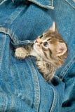 Kitten And Denim. Little kitten in a jeans jacket stock photos