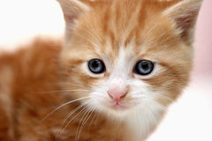 Kitten detail Royalty Free Stock Photography
