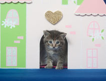 Kitten and docorative doorway Royalty Free Stock Images