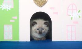 Kitten and docorative doorway Royalty Free Stock Photos