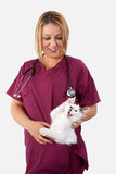 Kitten does not like the vet Royalty Free Stock Photography