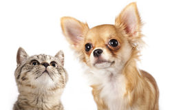 kitten and dog Royalty Free Stock Photos