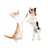 Kitten and Dog Dancing Together Royalty Free Stock Images