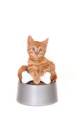 Kitten in a dog's bowl Stock Images
